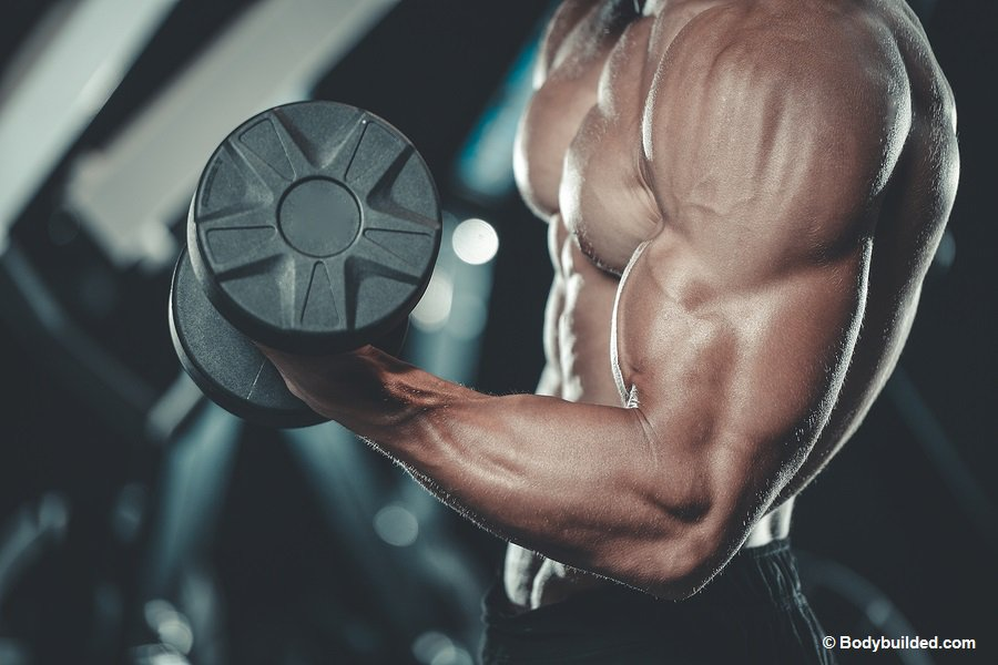 Bicep workouts for bigger arms muscles