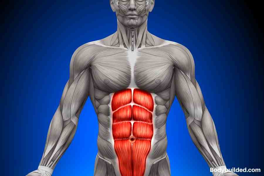 Anatomy of Abs