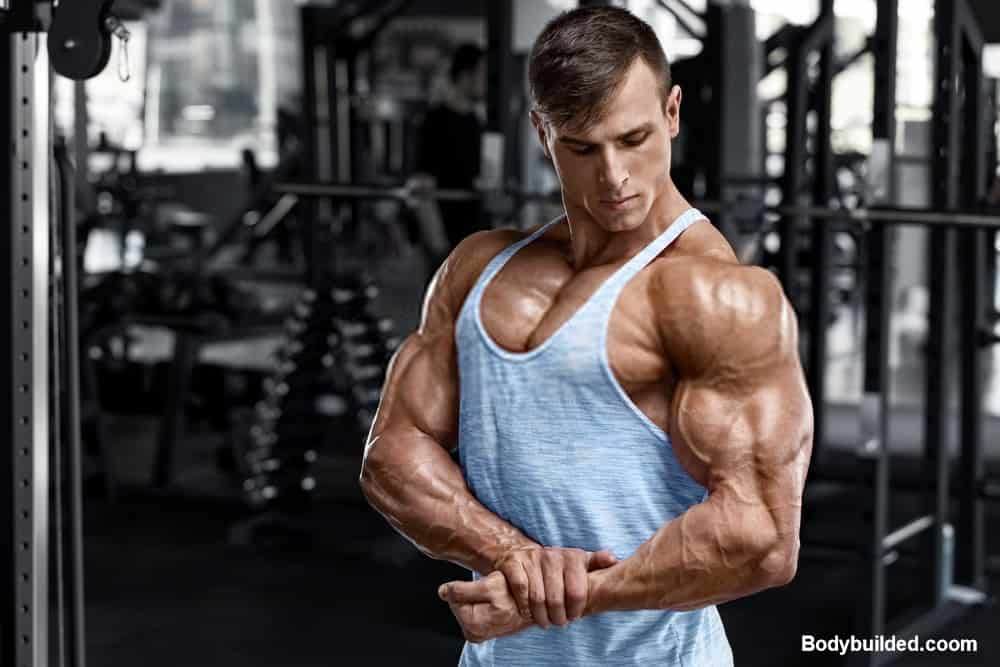 Best muscle building routine for muscle gaining